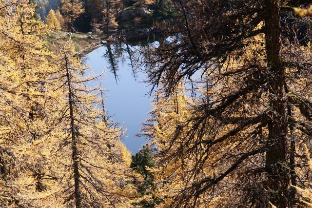 Testa del gias dei laghi for Le pigne dei larici